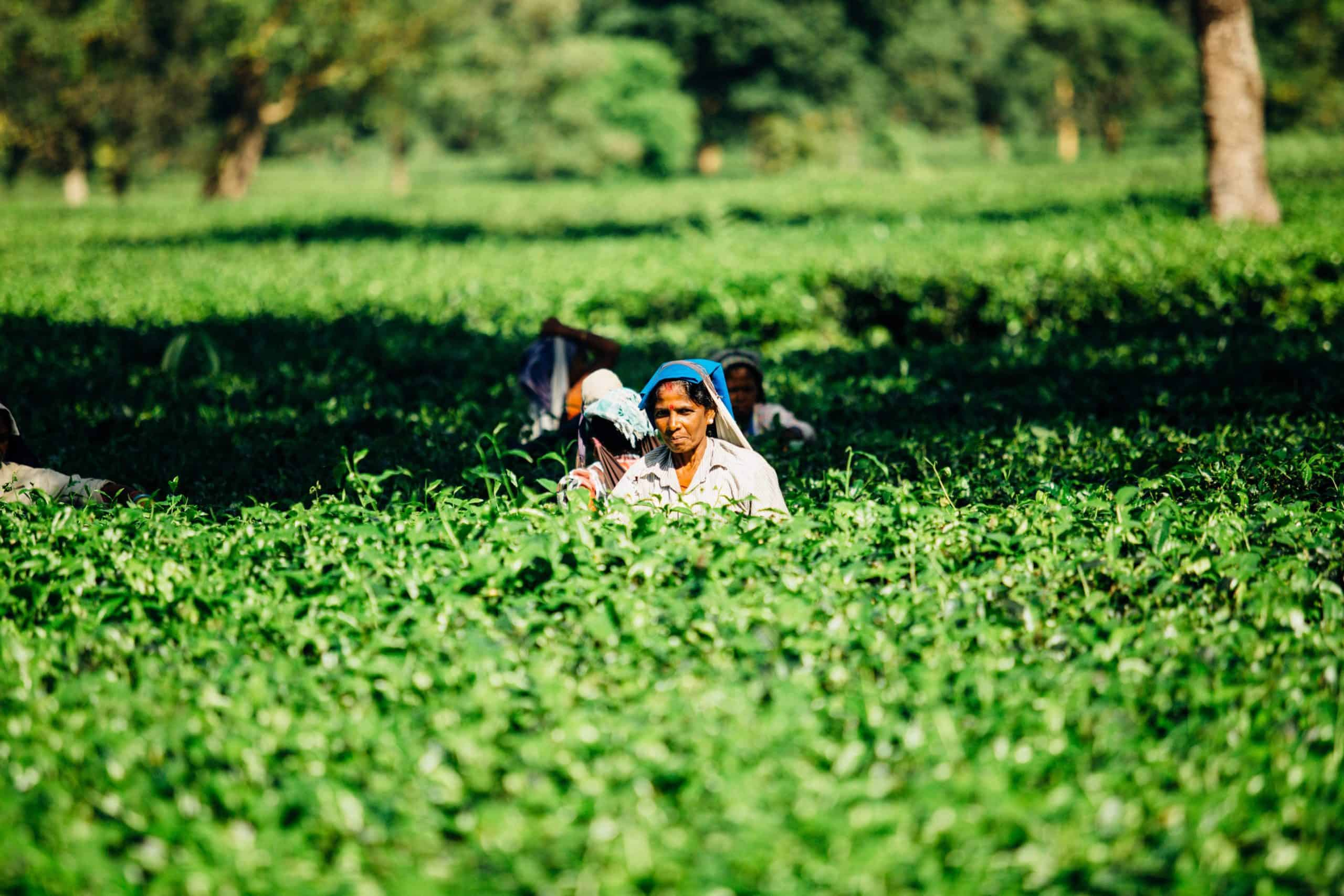india farmers protests green is the new black