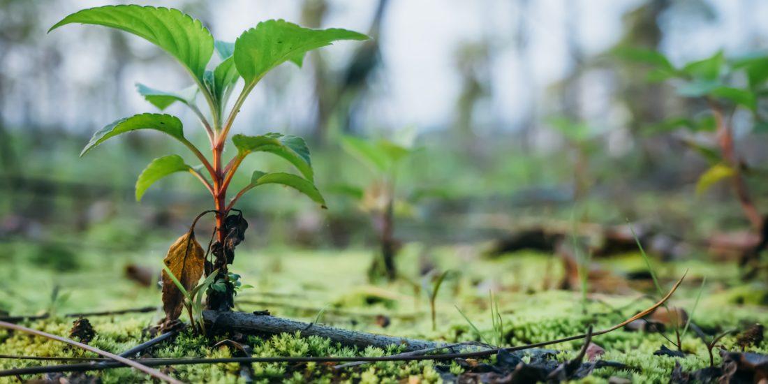 tree planting scheme handprint