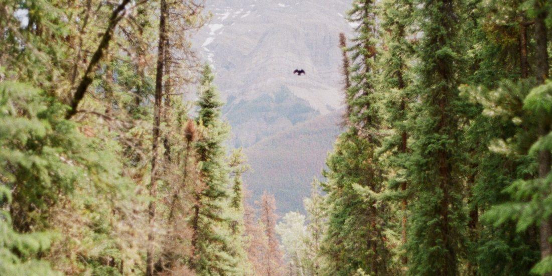 forest canada unsplash